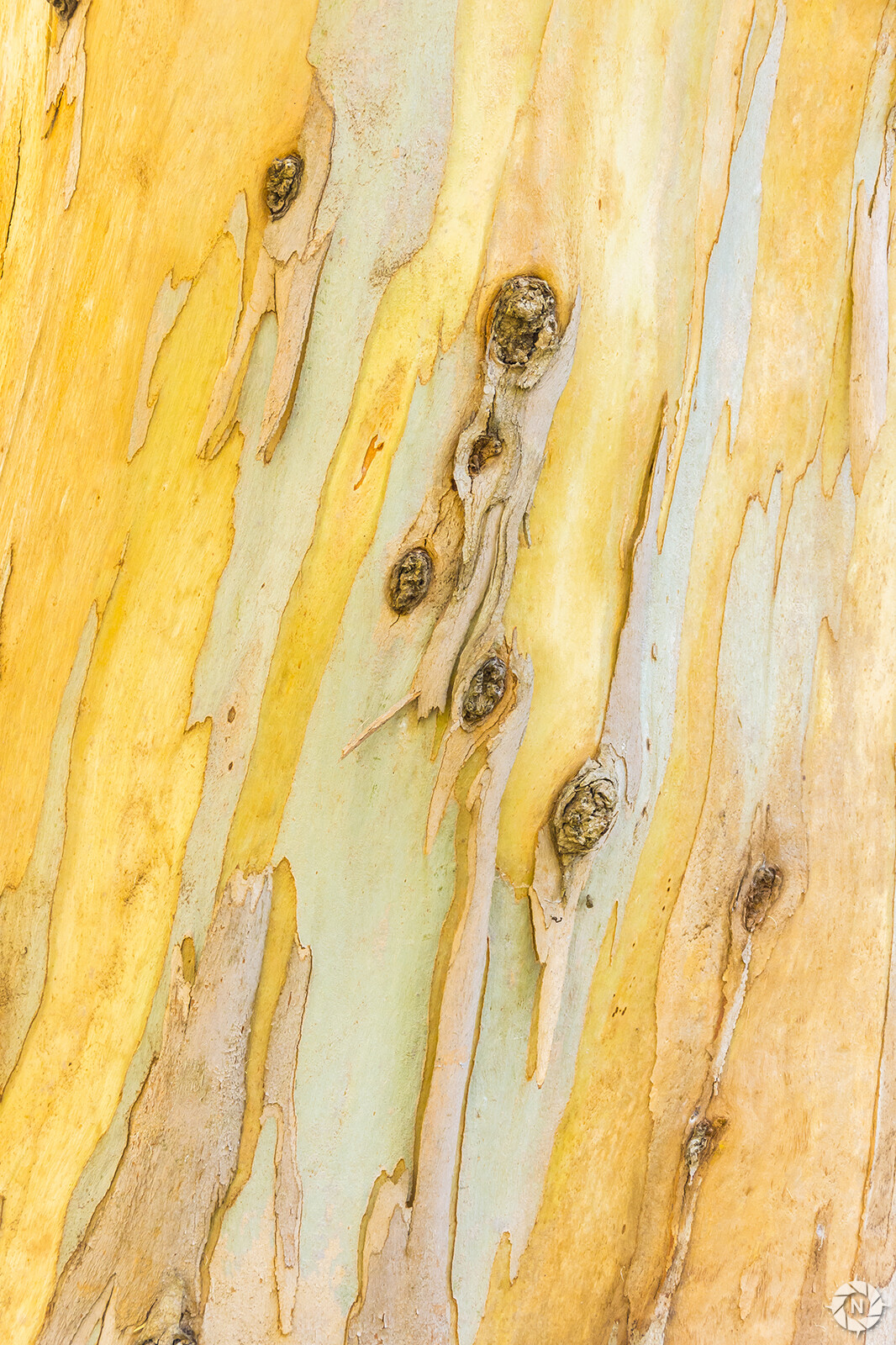 From the Texture Photo Pack: Tree Barks Volume 4  https://www.artstation.com/a/165844