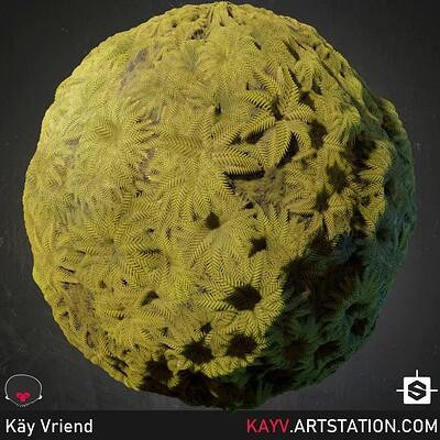 Kay vriend nodevember 28 fractal beauty