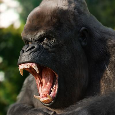 Manuel d onofrio gorilla portfolio 1 1