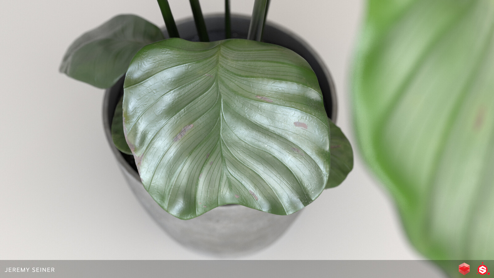 Closeup of a leaf rendered in Redshift with a different lighting setup.