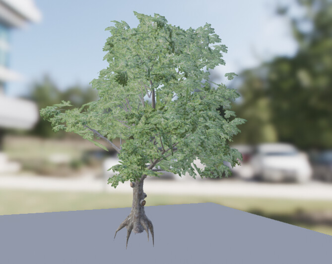 Broadleaf Tree created with SpeedTree
