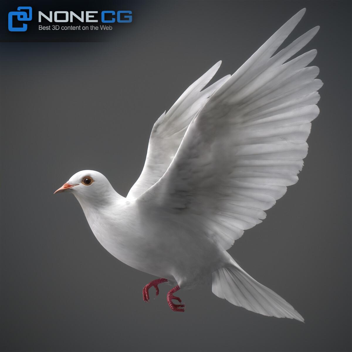 3D White Dove