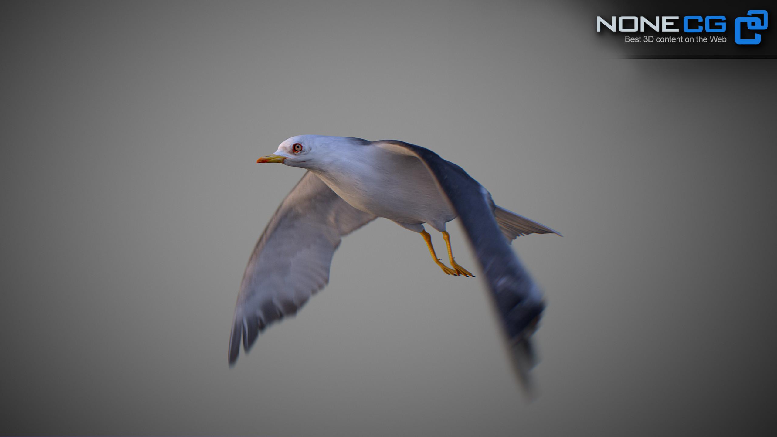 E:\[CAT]_Birds\Seagull Animated