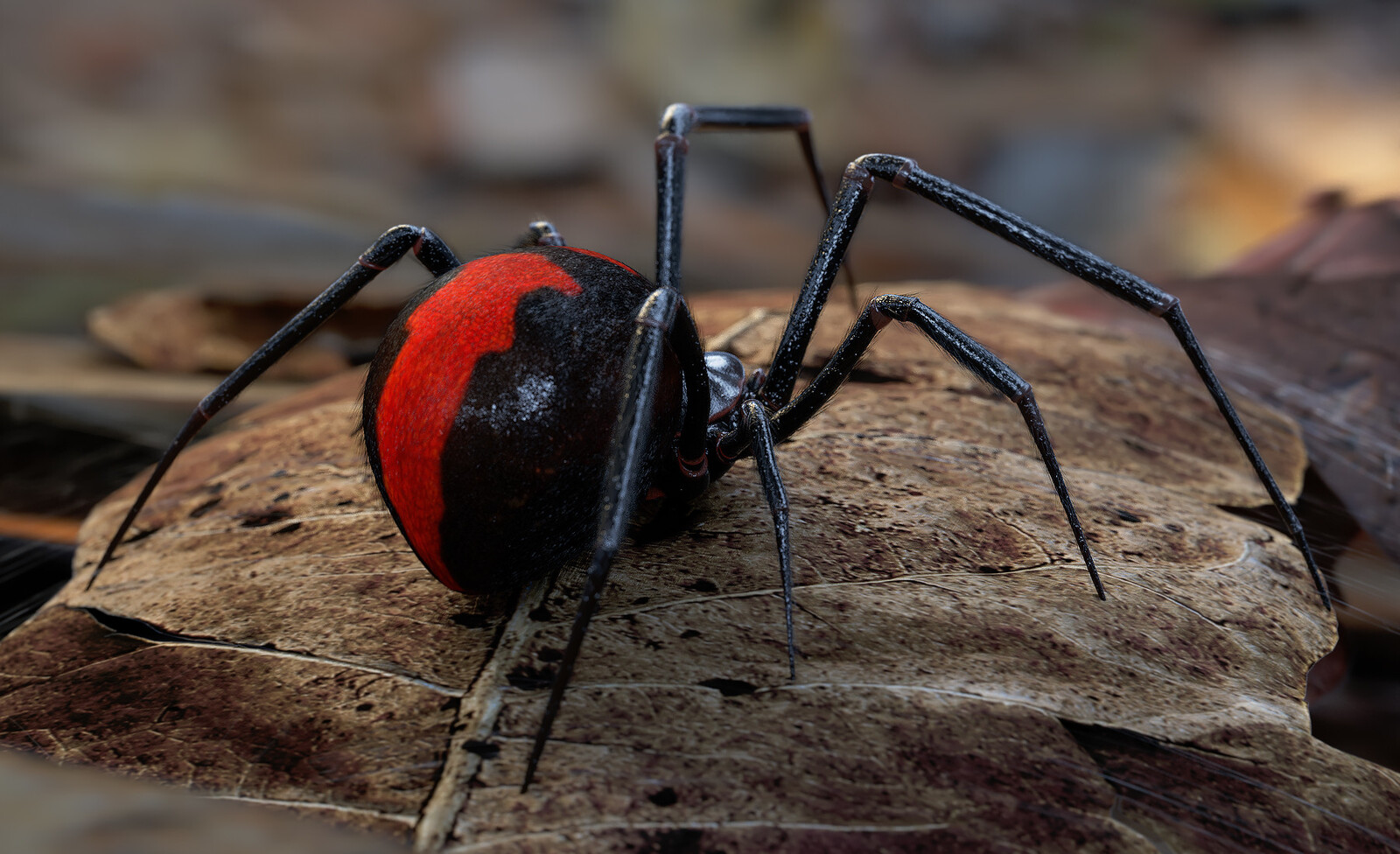 The actual reference. The Black Widow Spider.