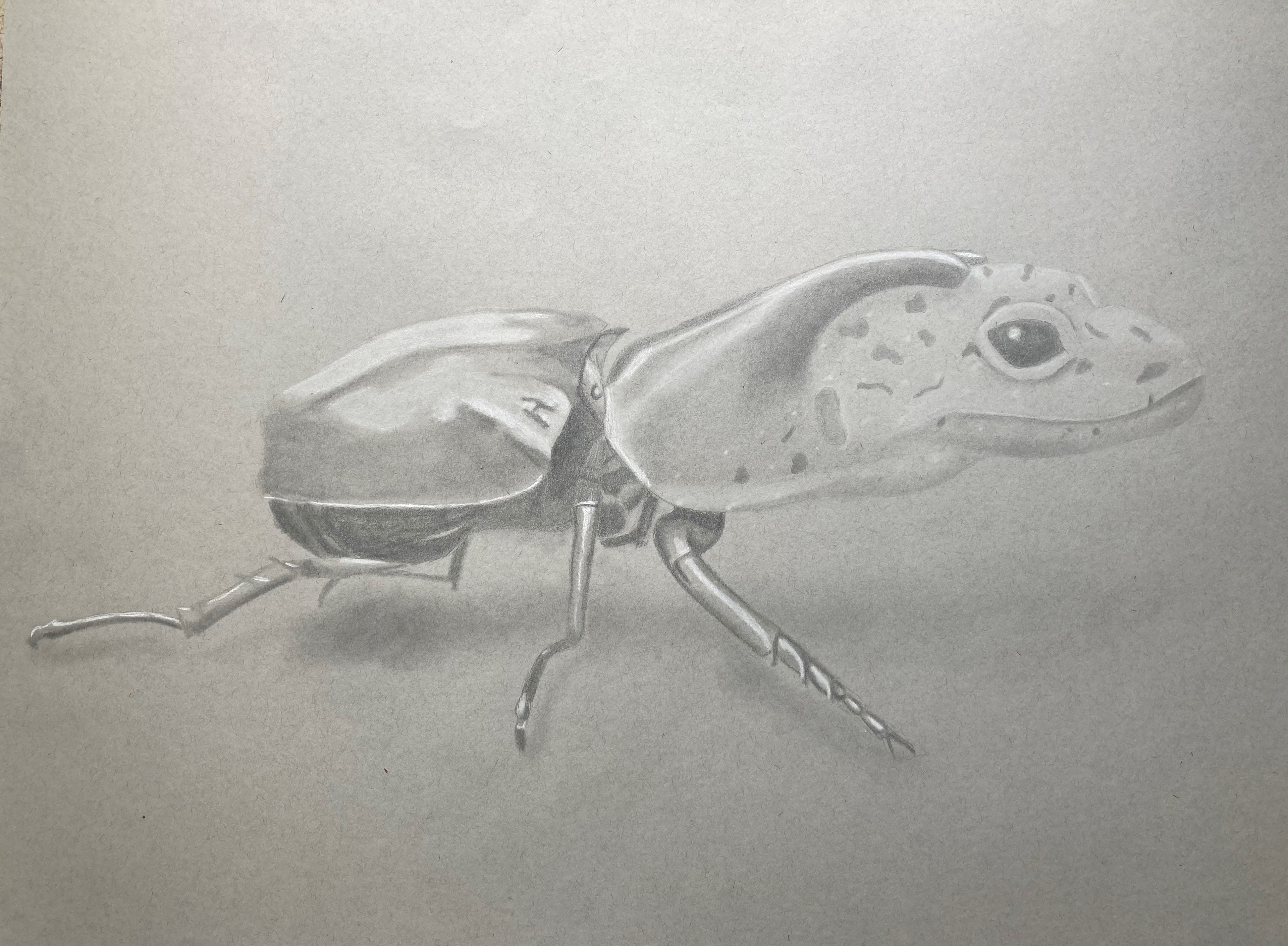 Morph of a beetle and gecko.