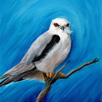 Ergo art black wing kite grain 300dpi 03