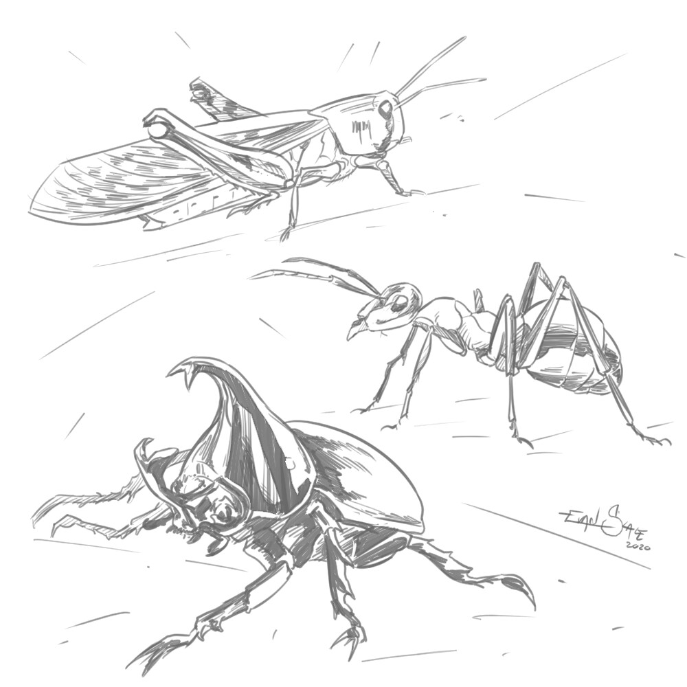 Insects/Bugs #3