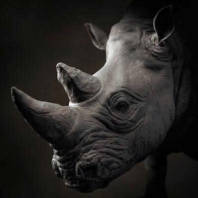 Gerar revilla rhino portrait 01