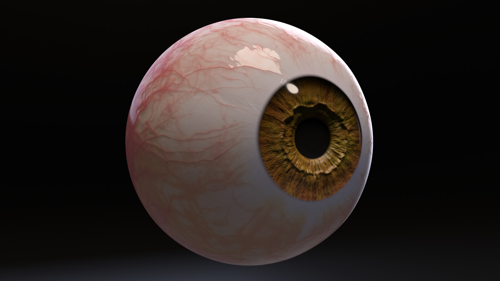 Photorealistic Eye with Pupil Dilation and Constriction
