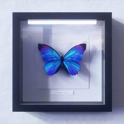 Blue Morpho Butterfly 3D Renders