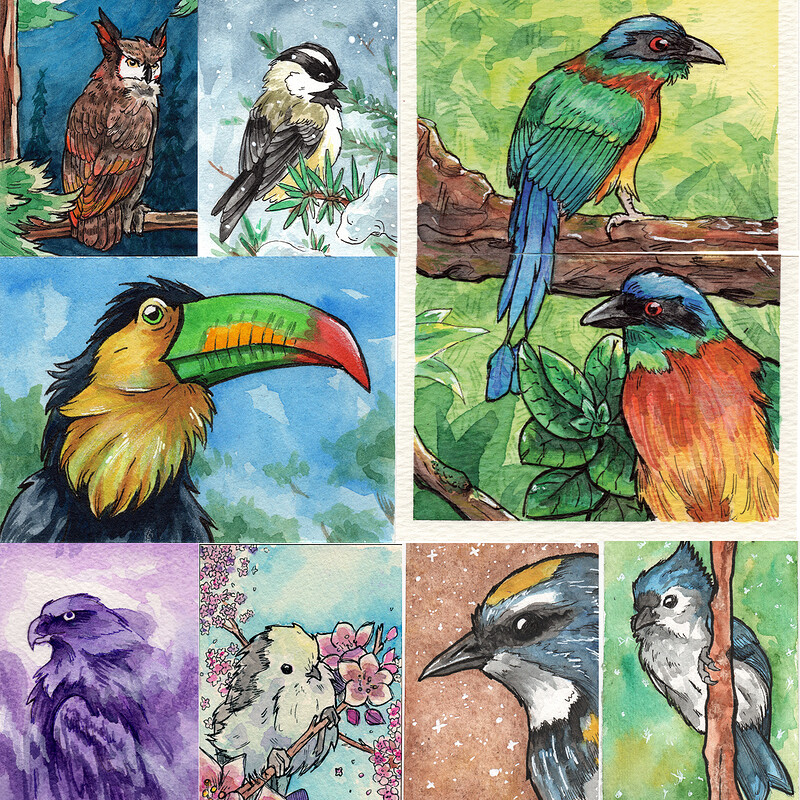 Wild Bird Sketch Card collection