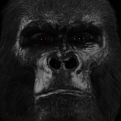 Marin mimica gorila2c