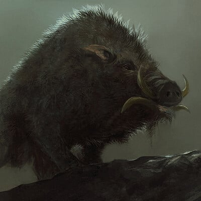 Adnan ali boar