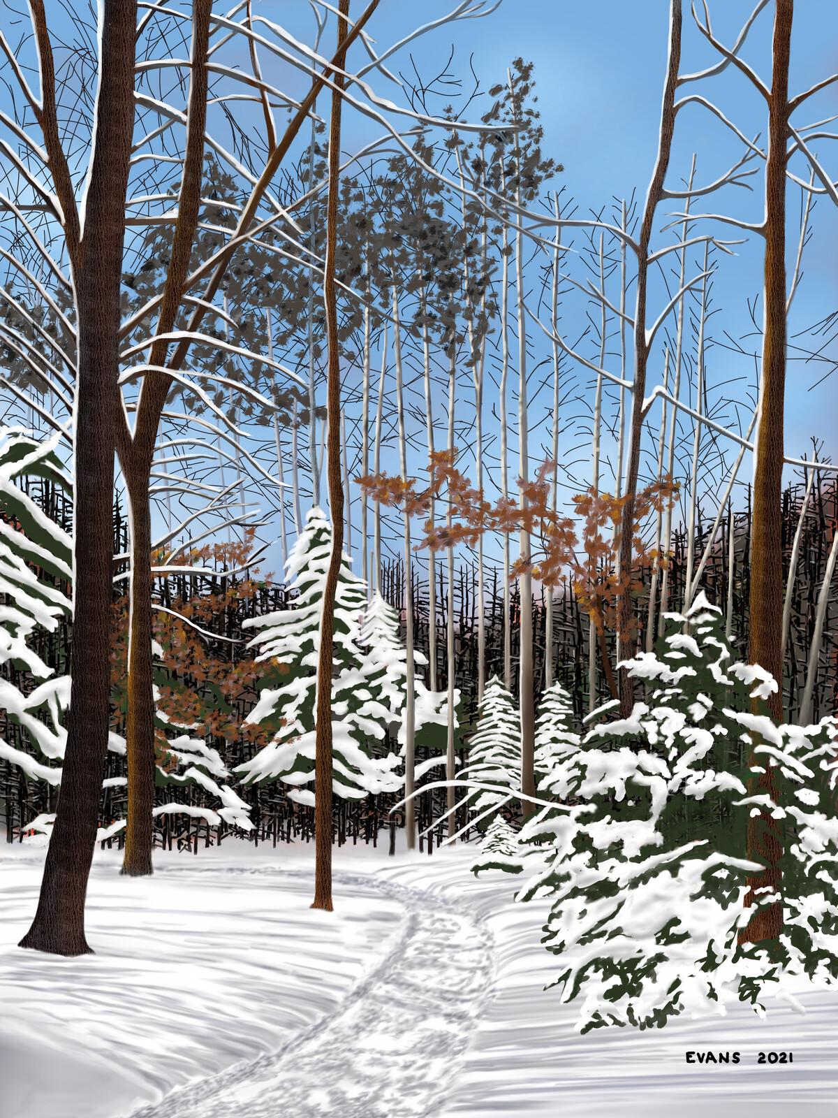 Winter Woods 2021