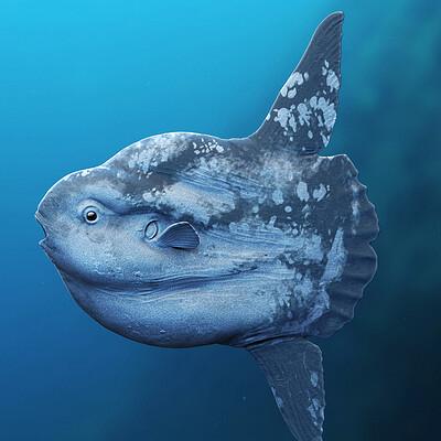 Jia hao sunfish modelcomp 01a