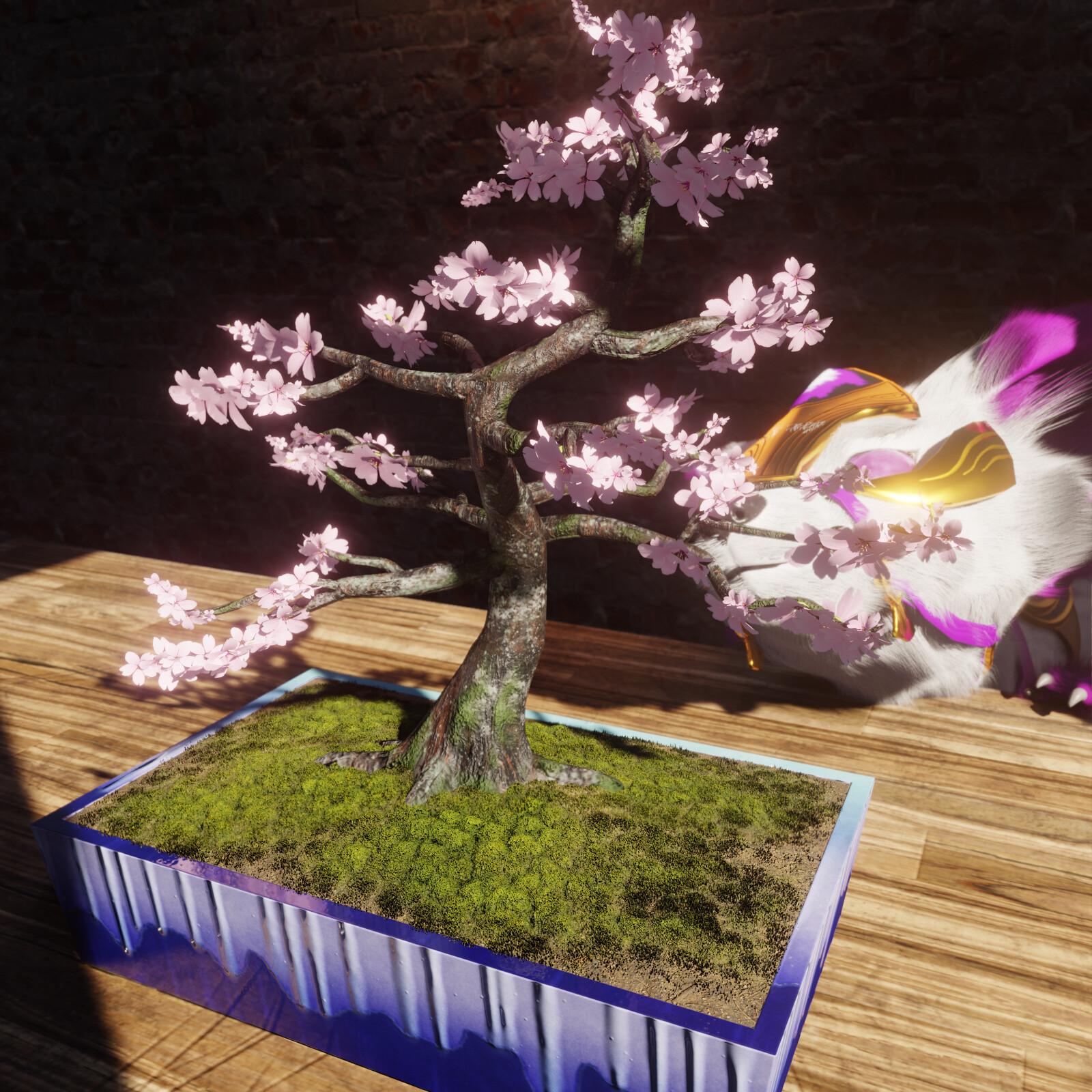 Countdown to Spring #8: Cherry Tree Bonsai