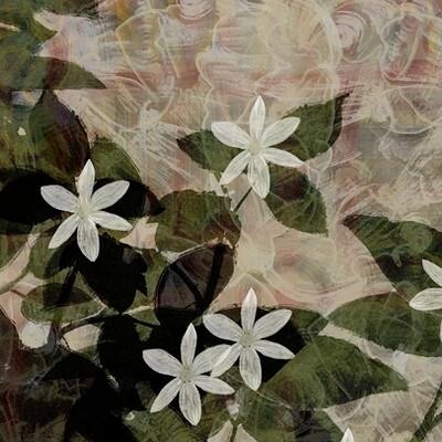 Waterlili jia 68 sumer flower 30x30