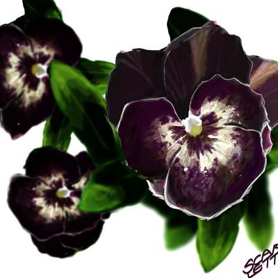 Scarlett shearwood flower power