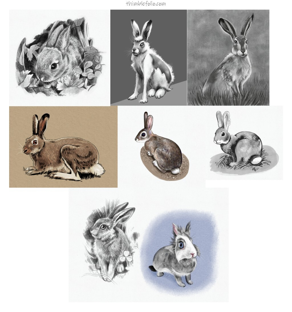 Weekly Studies Rabbits and Hares