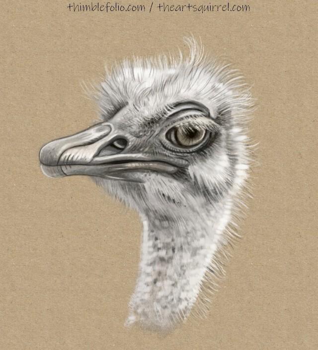 Grumpy Ostrich