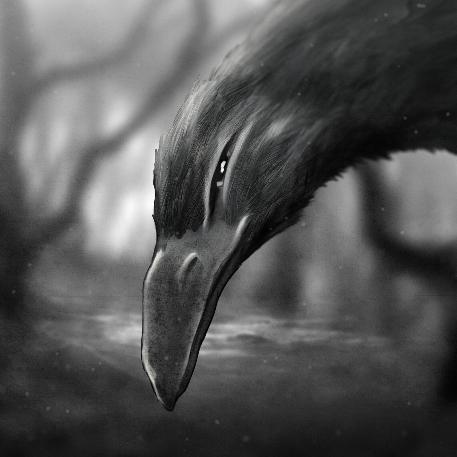 The Crow In The Woods
