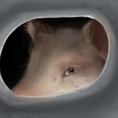 Holly cyprien pig eyes1
