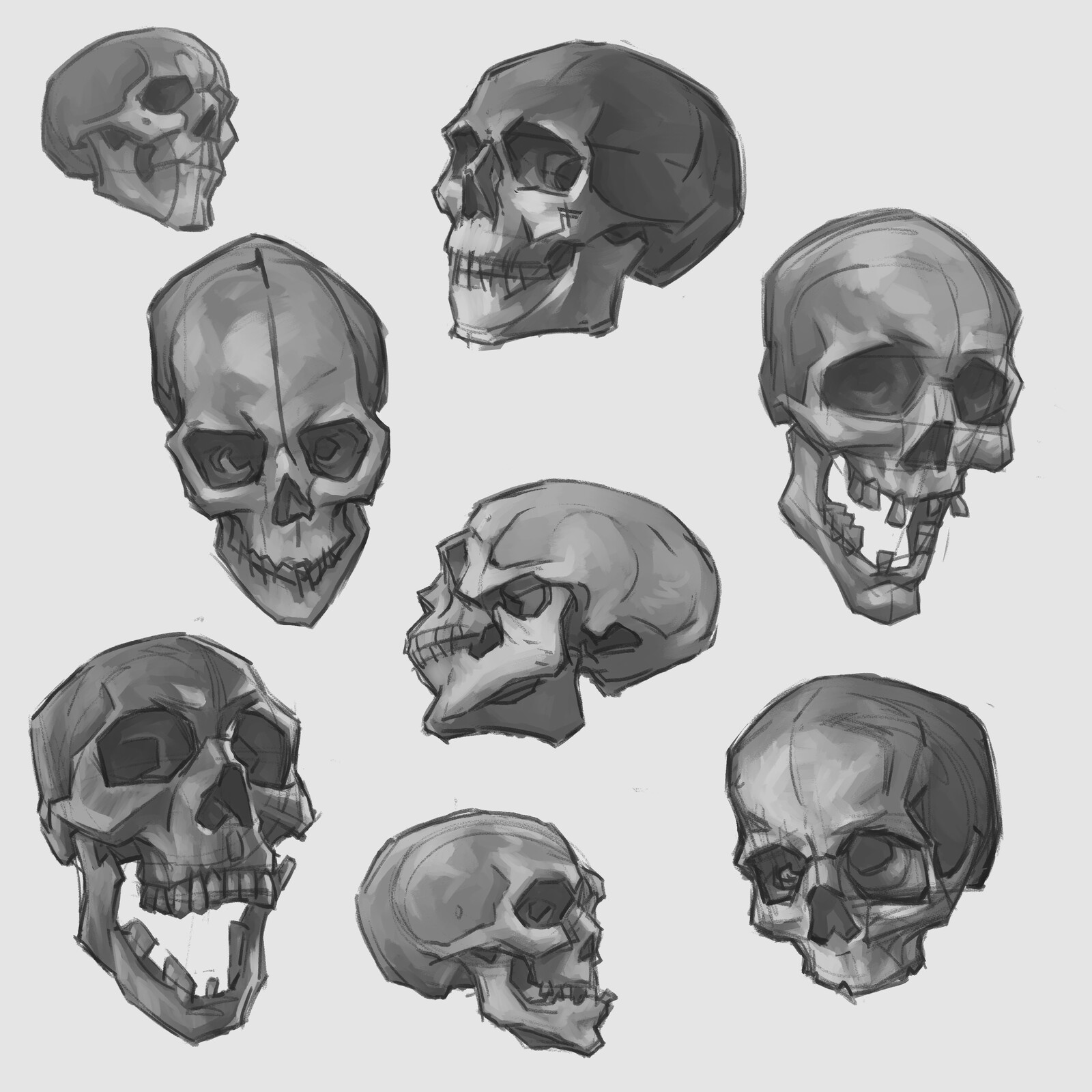 Skull Sketches (Gumroad Product)