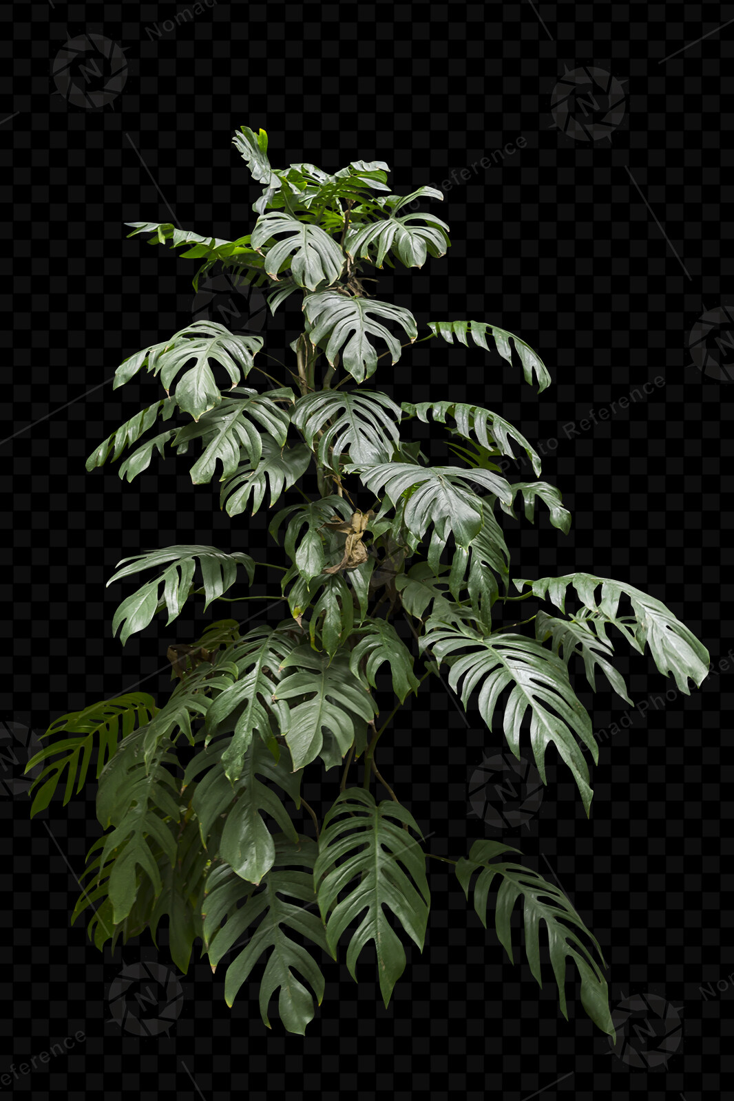 From the PNG Photo Pack: Exotic Trees volume 2  https://www.artstation.com/a/4717987