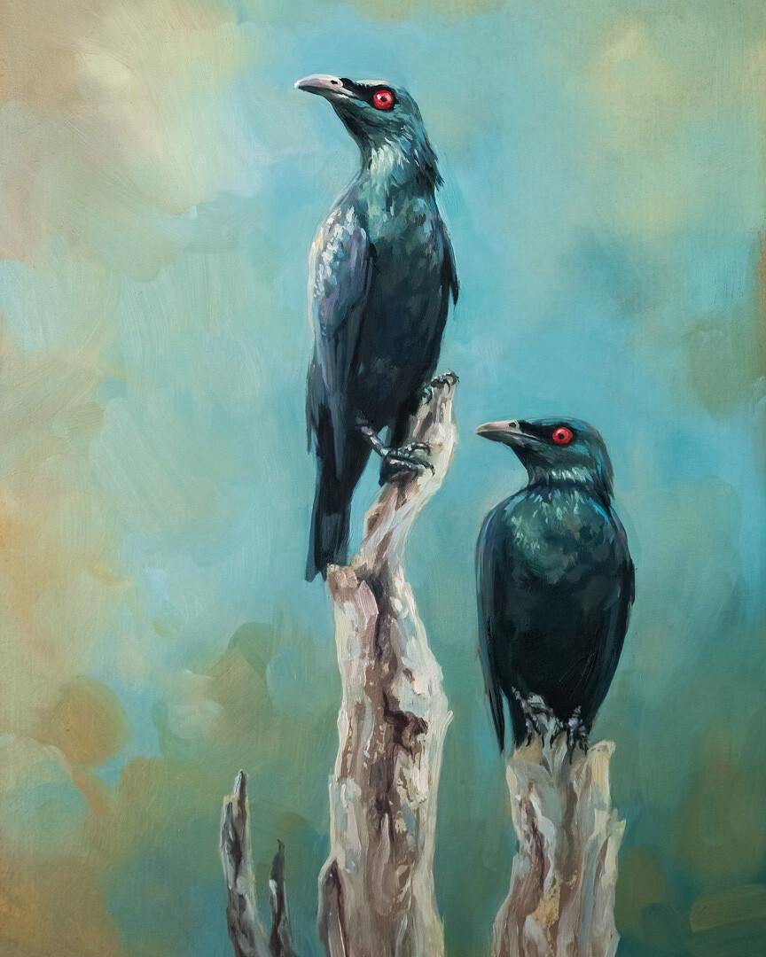 Philippine glossy starlings (Aplonis panayensis)