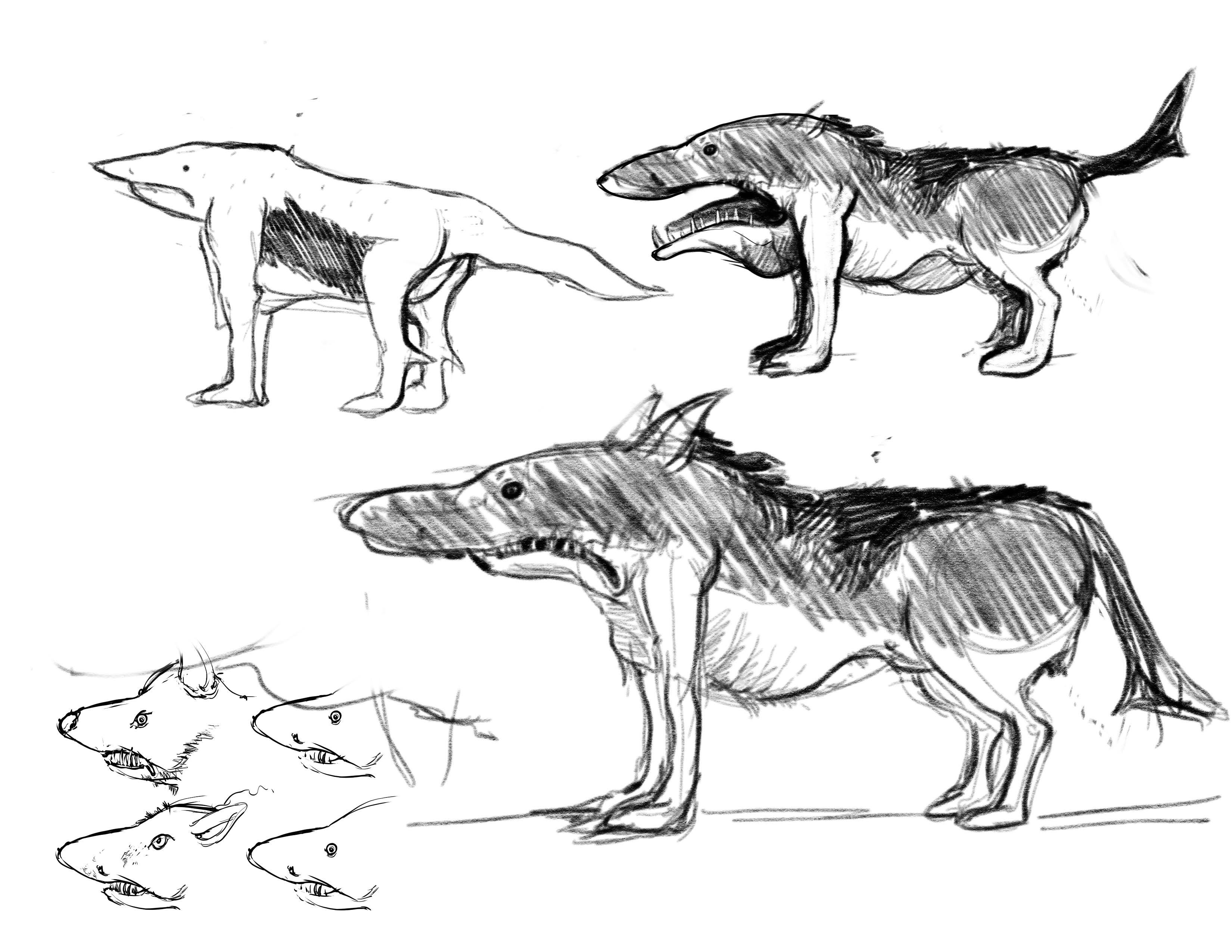 Concept ideation for the Shark Wolf creature character #2.