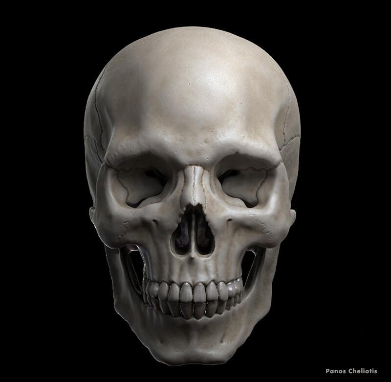 Human skull anatomy sculpture