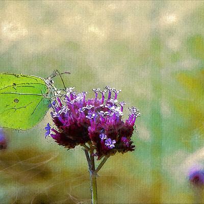 Mmcatsdesign butterfly 6521889
