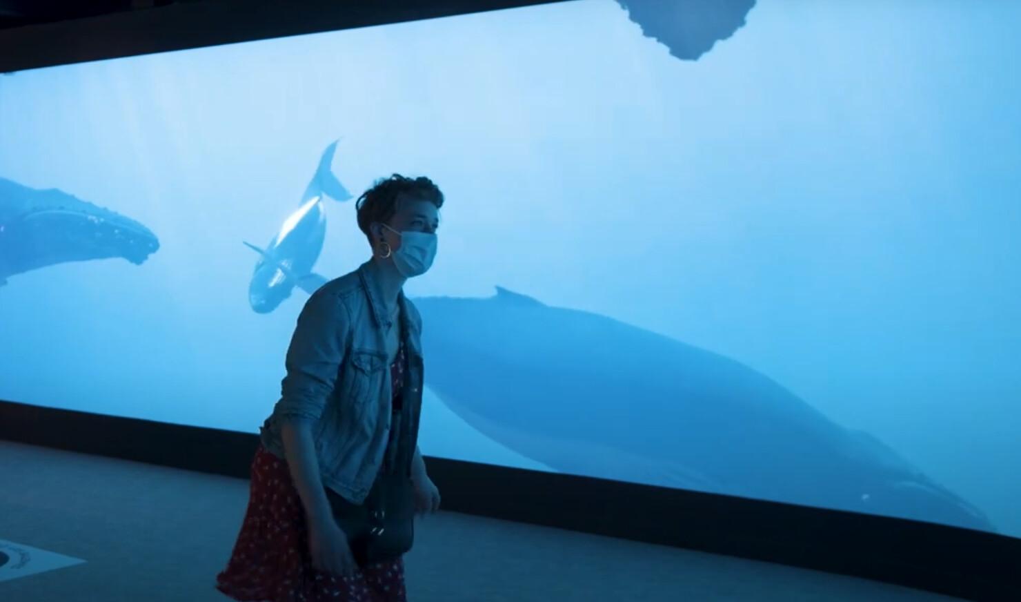 """""""Le Spot"""" - Aquarium Tropical du Palais de la Porte Dorée - Paris ©CREO"""