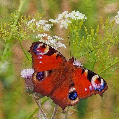 Mmcatsdesign butterfly2