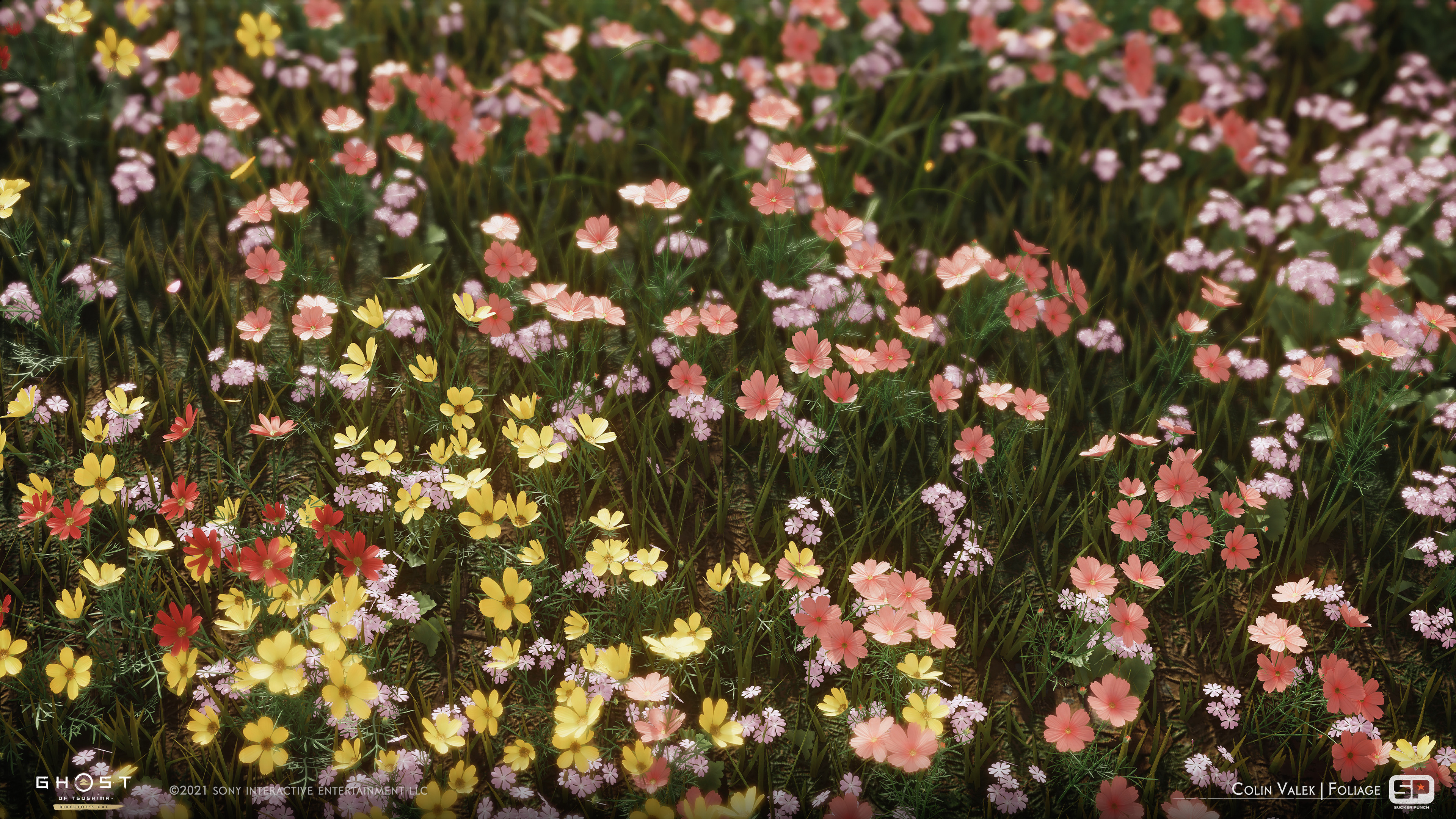Various cosmos flowers, with some Japanese primrose sprinkled in.