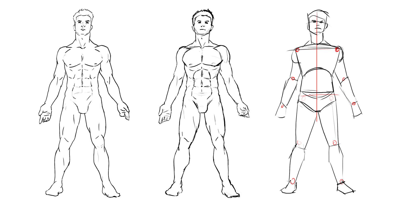 Line art Male Anatomy
