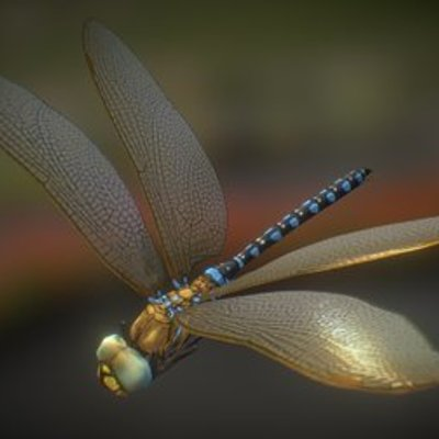 Dragonfly 00