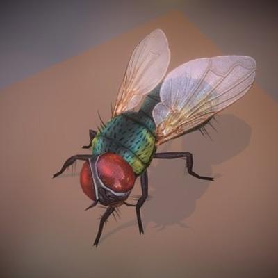 Idling Housefly