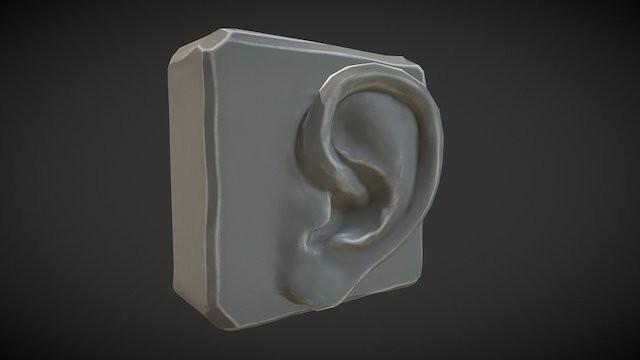 Anatomy Study - Ear