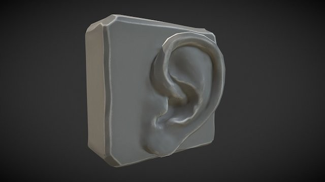 Anatomy Study - Ear