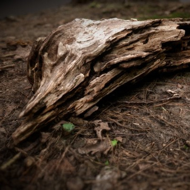 Forest Floor Photogrammetry Test 1