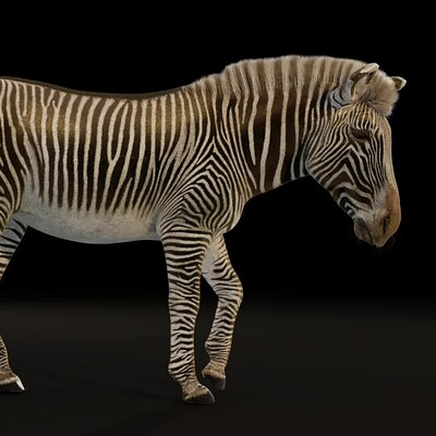Grevy's zebra turntable