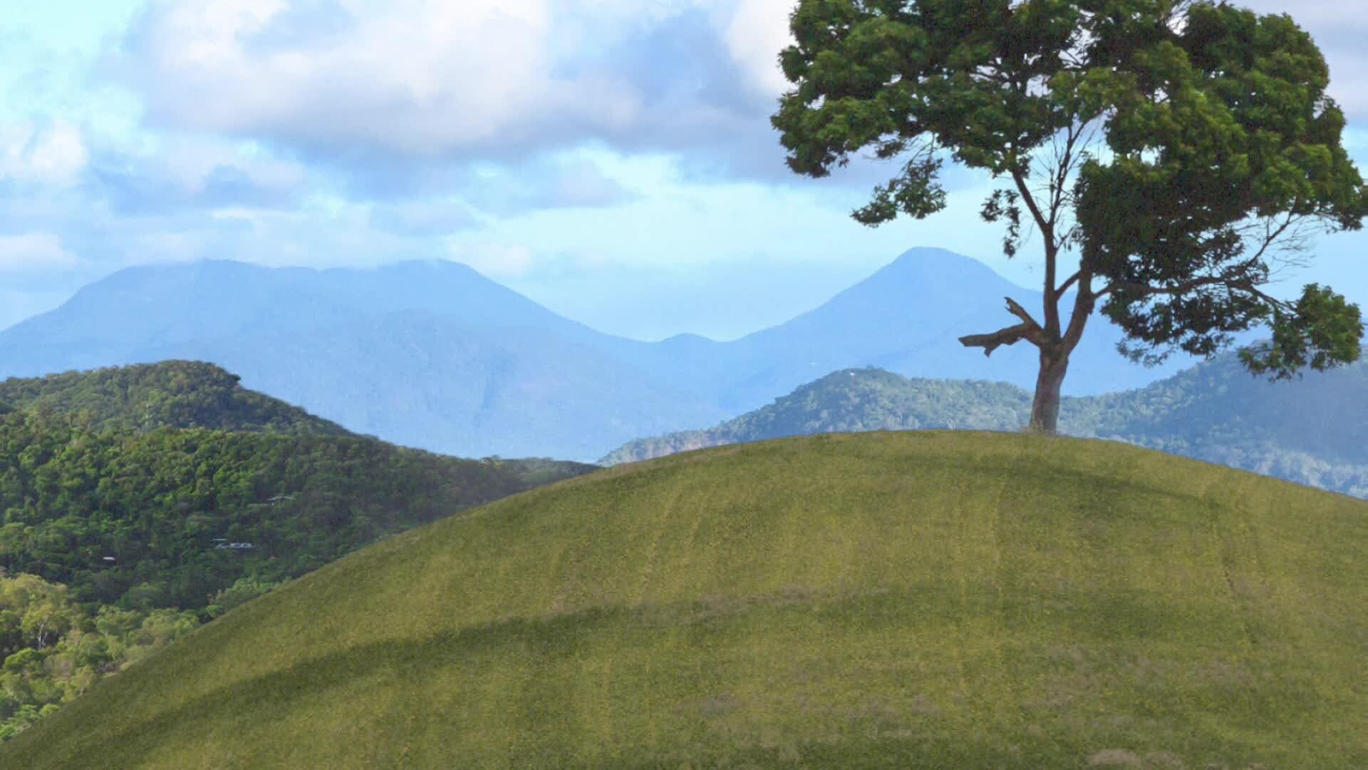 Tree Hill
