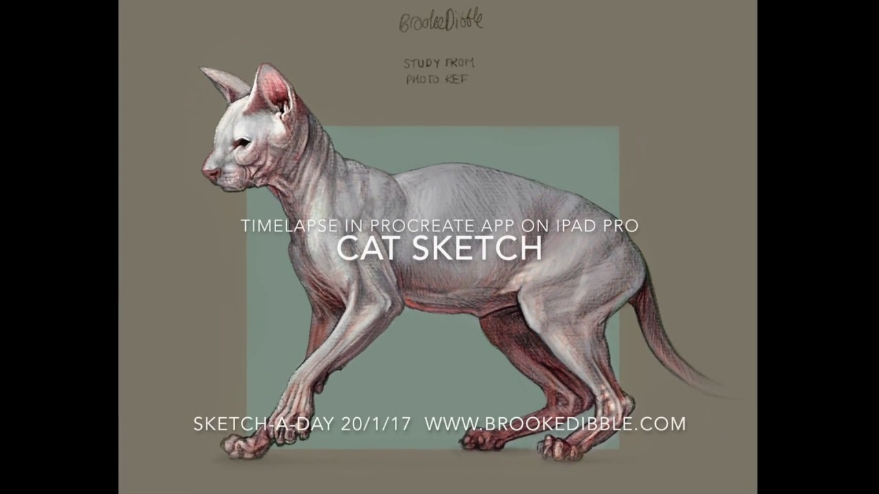 Various cat sketches from sketch-a-day challenge