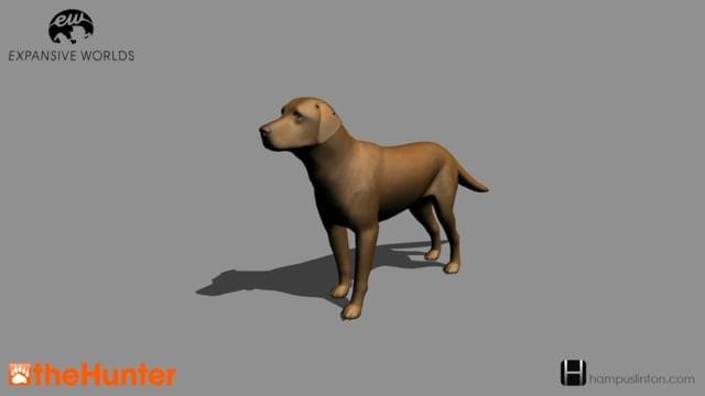 Labrador Retriever from theHunter (2015)