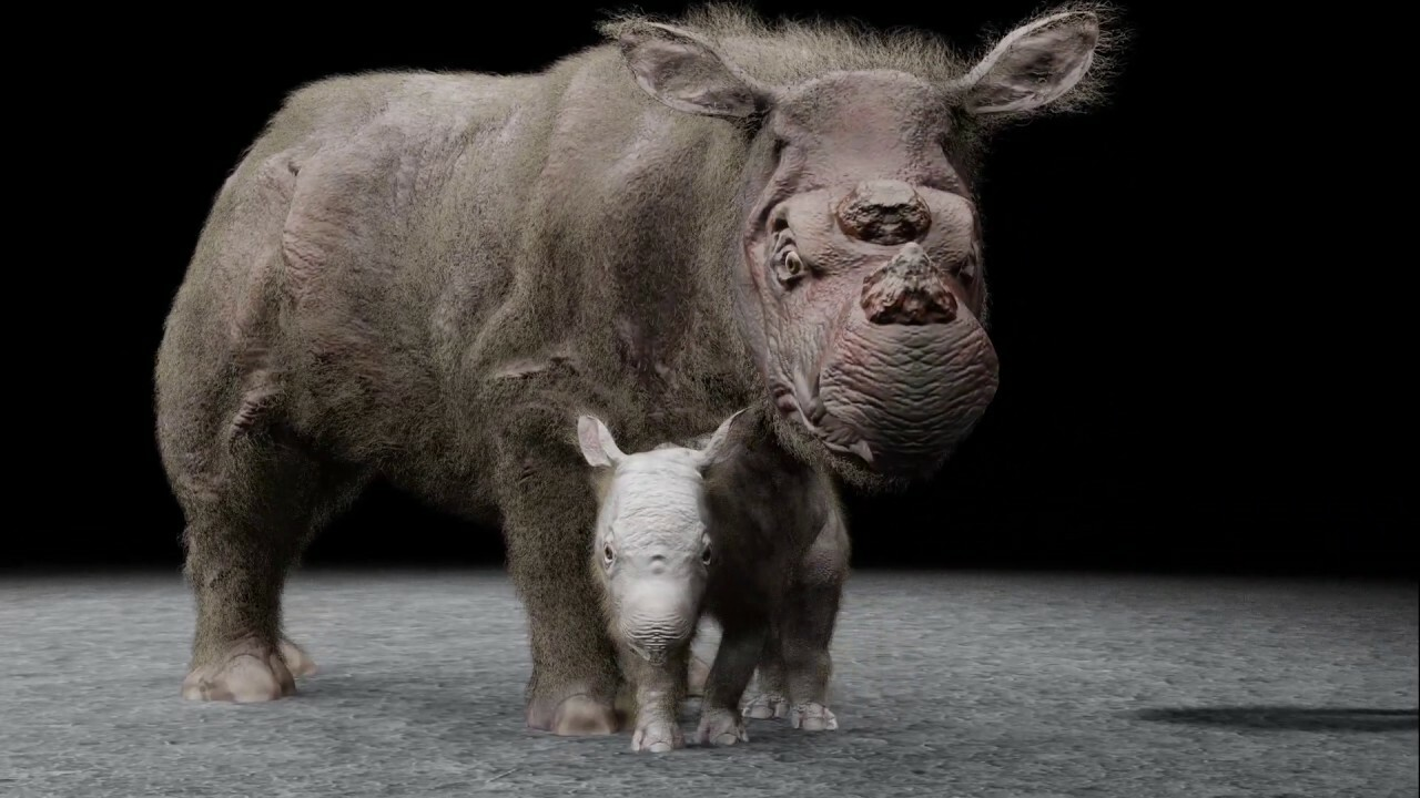 Sumatran rhino mother and child animation