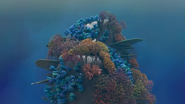 Procedural Modelling: Coral