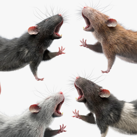 Rat Fur Rigged Collection
