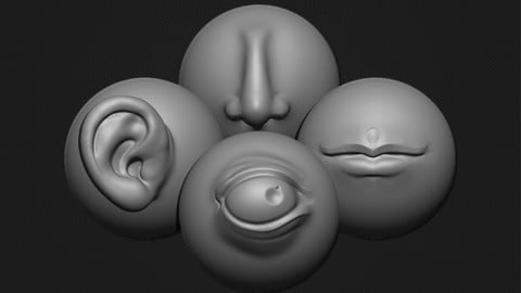 Zbrush - 80 Stylized Anatomy VDM Brushes Vol.1