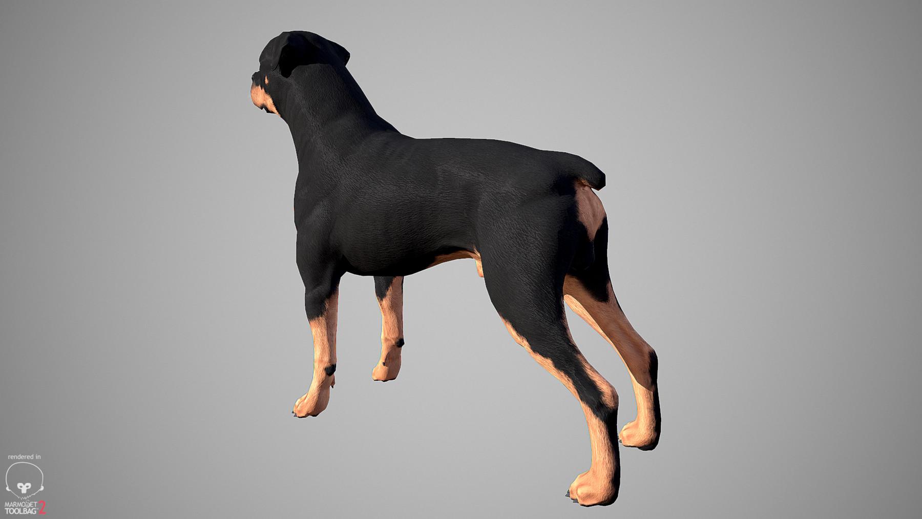 Rottweiler by alexlashko marmoset 04